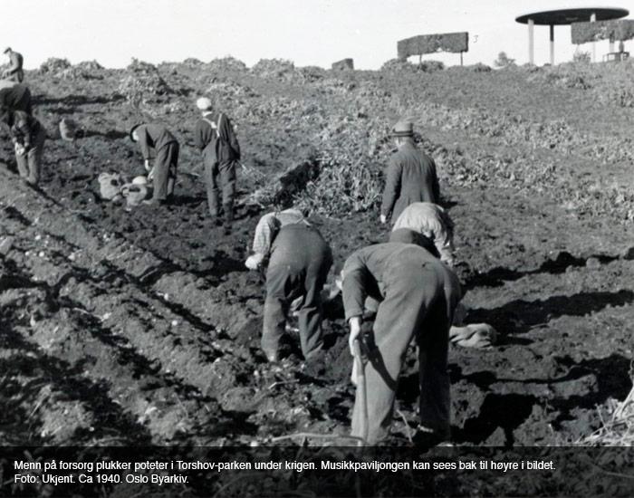 Potetplukking i Oslo 1940