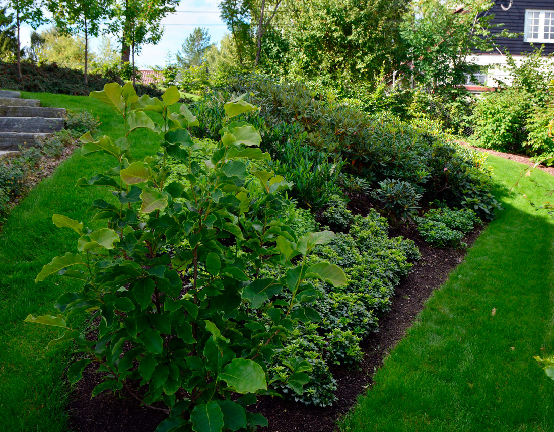 Grønne hager